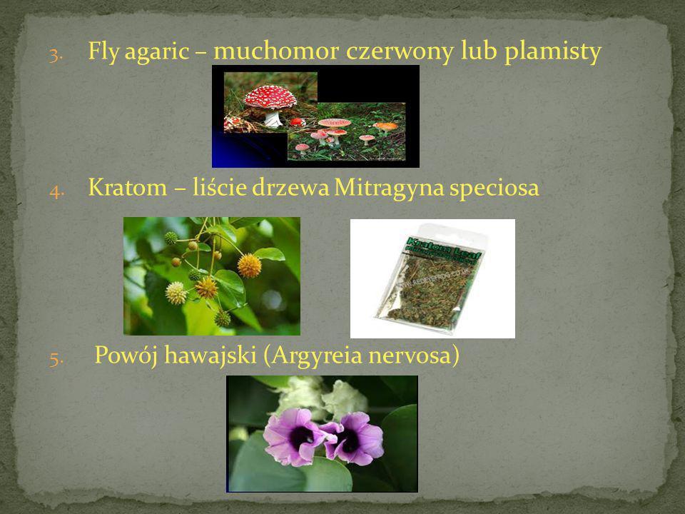 3. Fly agaric – muchomor czerwony lub plamisty 4. Kratom – liście drzewa Mitragyna speciosa 5. Powój hawajski (Argyreia nervosa)
