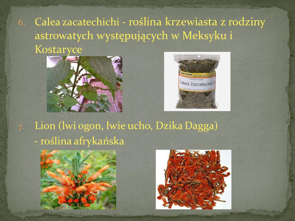 6. Calea zacatechichi - roślina krzewiasta z rodziny astrowatych występujących w Meksyku i Kostaryce 7. Lion (lwi ogon, lwie ucho, Dzika Dagga) - rośl