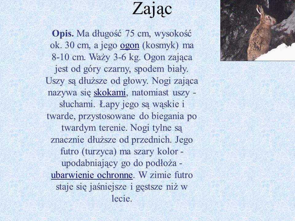 Wiewiórka Opis. Osiąga długość ciała 19,5 - 29,0 cm, ogona 14 - 24 cm. Jest typowym zwierzęciem nadrzewnym. Grzbiet ubarwiony ma na kolor od rudego do