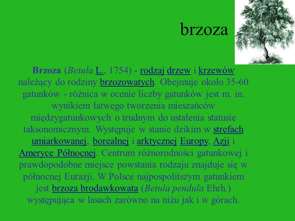 modrzew Modrzew (Larix Mill., 1754) - rodzaj drzew z rodziny sosnowatych, który obejmuje 10 gatunków występujących na obszarach umiarkowanych i chłodn