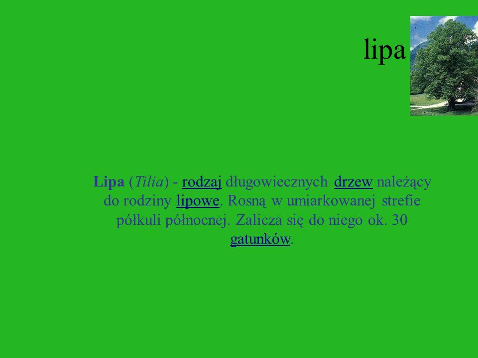 brzoza Brzoza (Betula L., 1754) - rodzaj drzew i krzewów należący do rodziny brzozowatych. Obejmuje około 35-60 gatunków - różnica w ocenie liczby gat