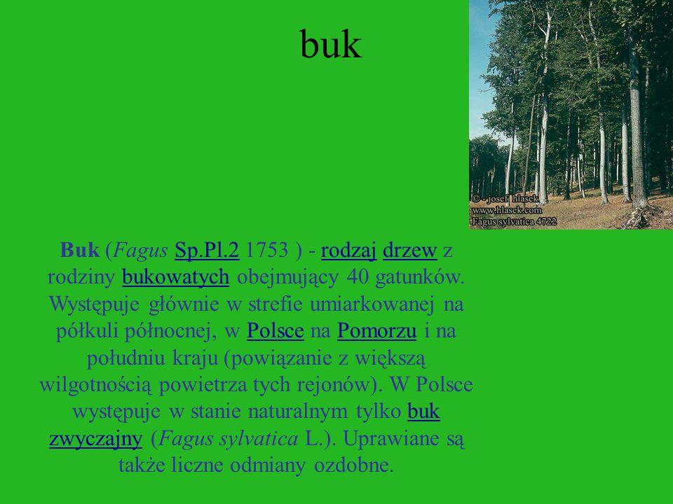 lipa Lipa (Tilia) - rodzaj długowiecznych drzew należący do rodziny lipowe. Rosną w umiarkowanej strefie półkuli północnej. Zalicza się do niego ok. 3