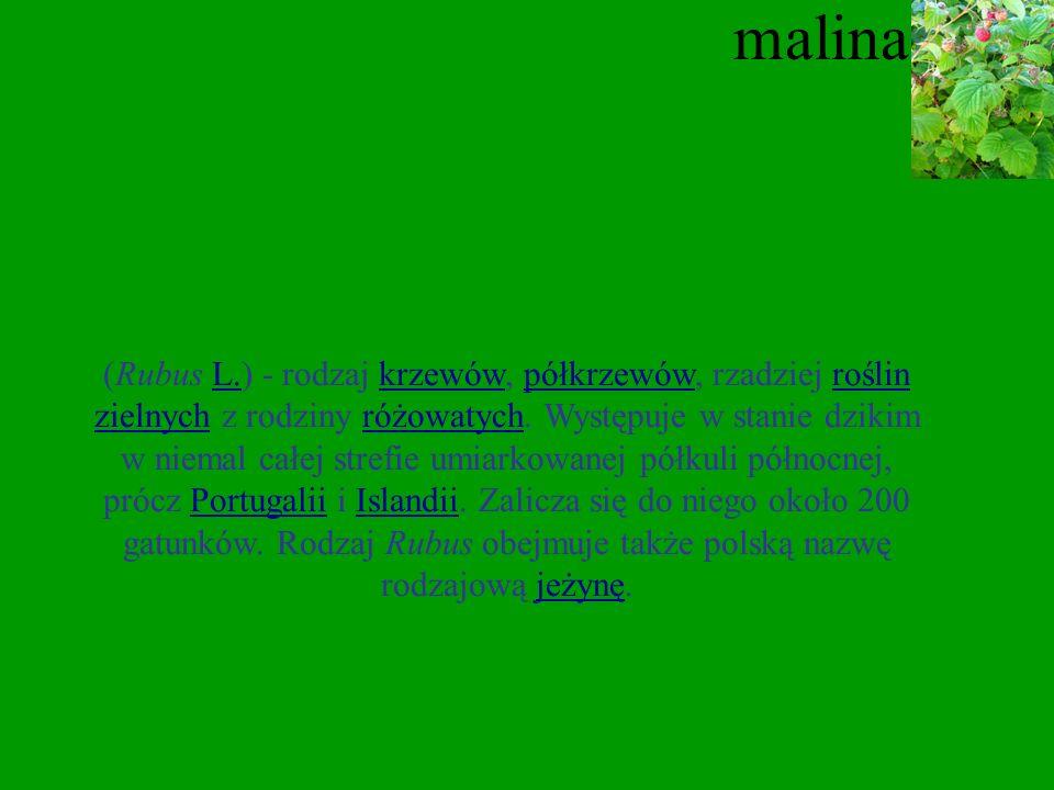 kruszyna Kruszyna (Frangula Mill.) – gatunek krzewu należący do rodziny szakłakowatych. W Polsce występuje pospolicie na całym niżu i w niższych położ