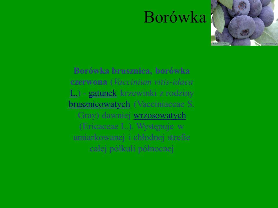 Jeżyna Jeżyna, ożyna (Eubatus) Focke syn. Rubus - jako podrodzaj (nie rodzaj) roślin z rodzaju malina (Rubus) z rodziny różowatych. Pozostałe gatunki