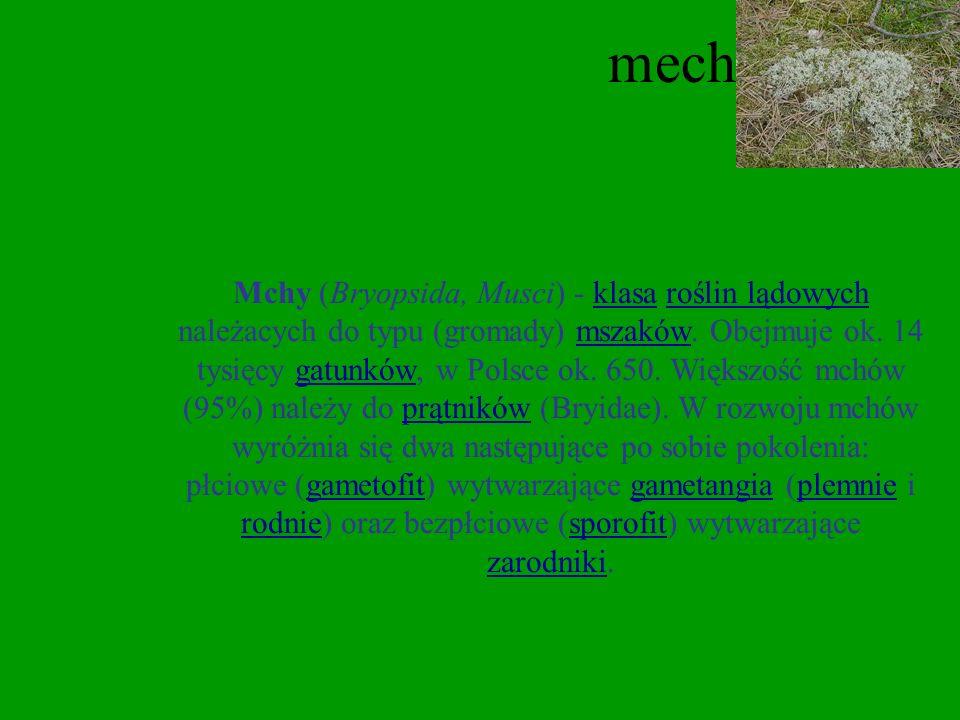 Paproć Paprotka (Polypodium) – rodzaj roślin należący do rodziny paprotkowatych. W florze Polski występuje tylko jeden gatunek.rodzaj paprotkowatych f