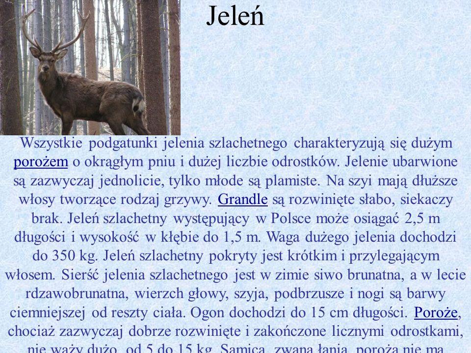 Występowanie roślin i zwierząt na terenie leśnictwa Szary Kierz