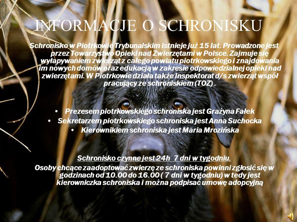 INFORMACJE O SCHRONISKU Schronisko w Piotrkowie Trybunalskim istnieje już 15 lat.