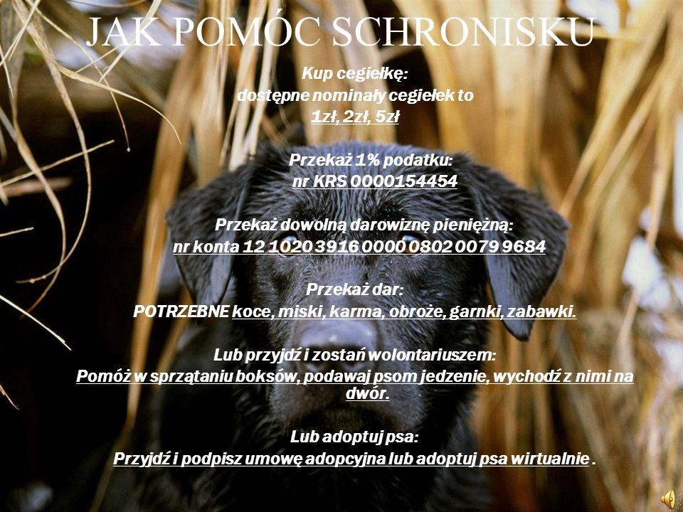 INFORMACJE O SCHRONISKU Schronisko w Piotrkowie Trybunalskim istnieje już 15 lat. Prowadzone jest przez Towarzystwo Opieki nad Zwierzętami w Polsce. Z
