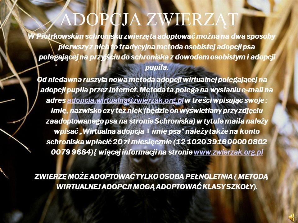 ADOPCJA ZWIERZĄT W Piotrkowskim schronisku zwierzęta adoptować można na dwa sposoby pierwszy z nich to tradycyjna metoda osobistej adopcji psa polegającej na przyjściu do schroniska z dowodem osobistym i adopcji pupila.