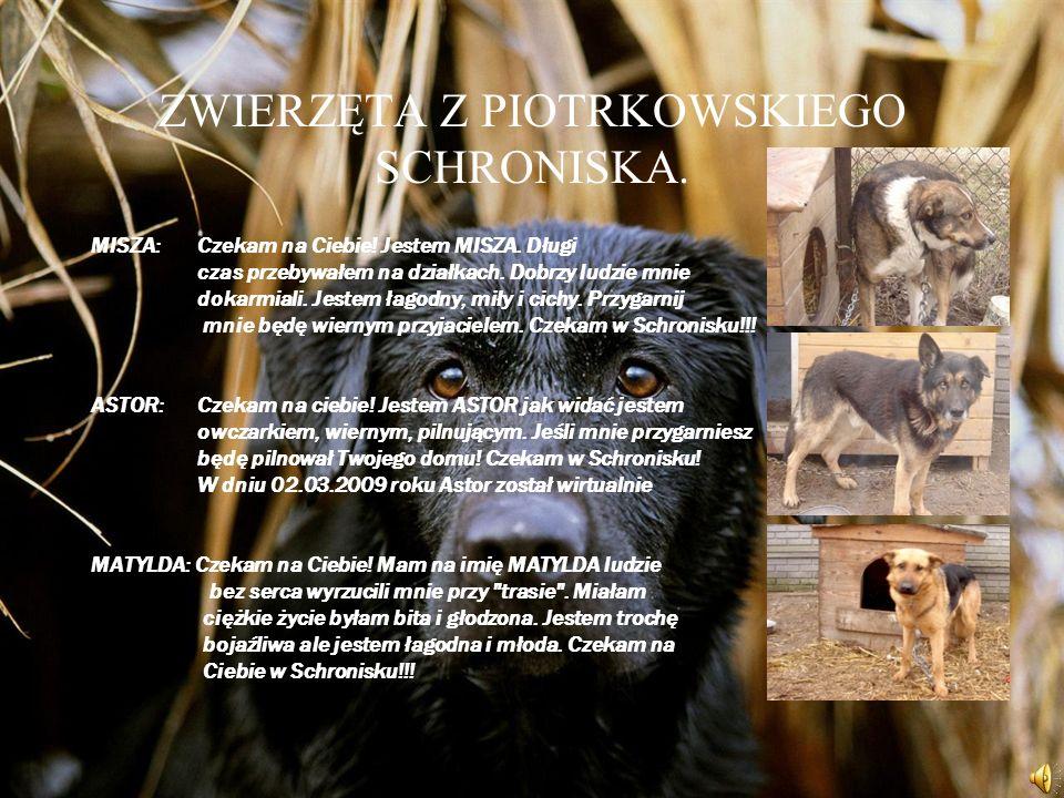 TROSZKĘ O TOWARZYSTWIE OPIEKI NAD ZWIERZĘTAMI W POLSCE Towarzystwo Opieki nad Zwierzętami w Polsce jest organizacją pozarządową o ogólnopolskim zasięg