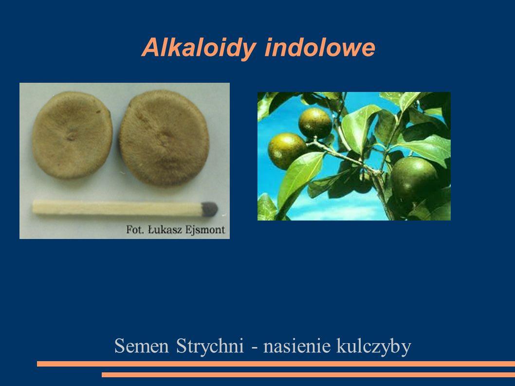 Alkaloidy indolowe Semen Strychni - nasienie kulczyby