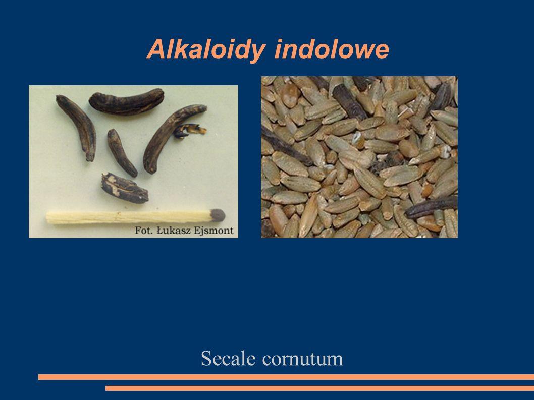 Alkaloidy indolowe Secale cornutum