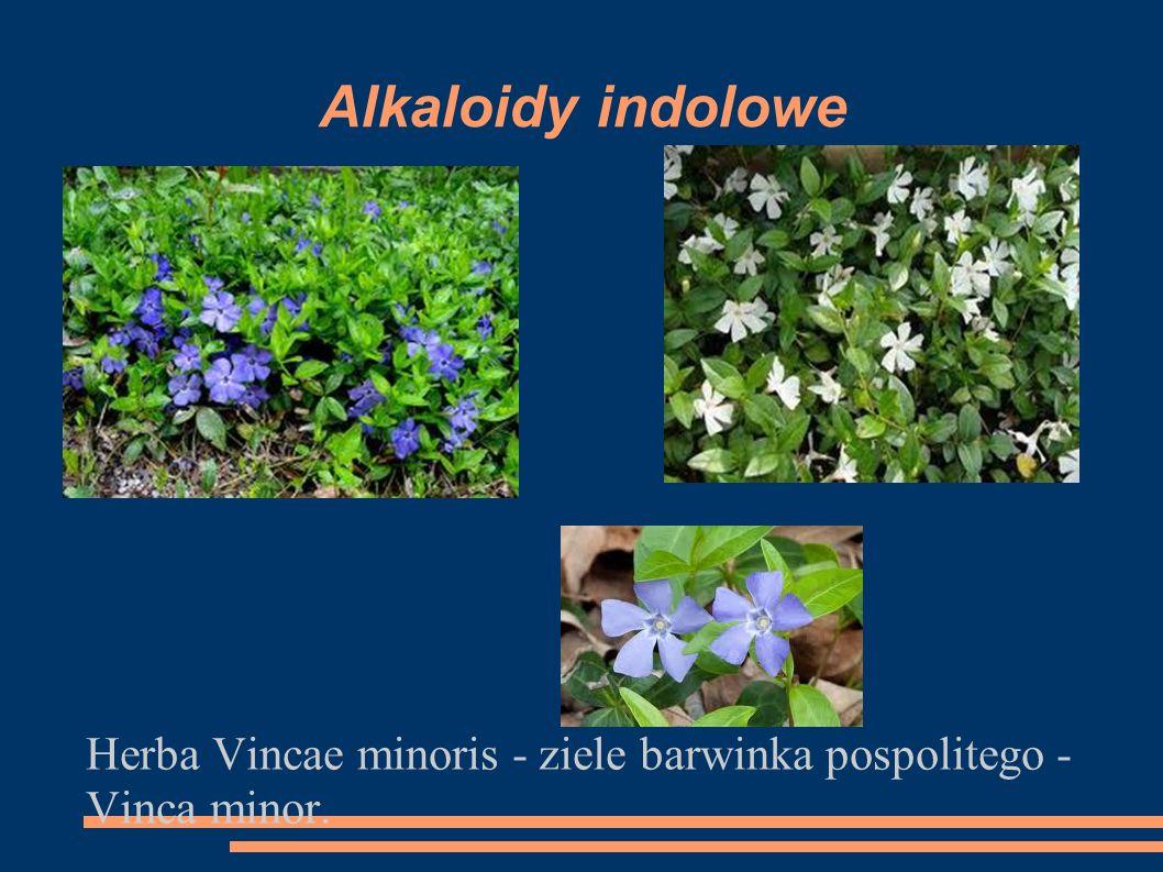 Alkaloidy indolowe Herba Vincae minoris - ziele barwinka pospolitego - Vinca minor.