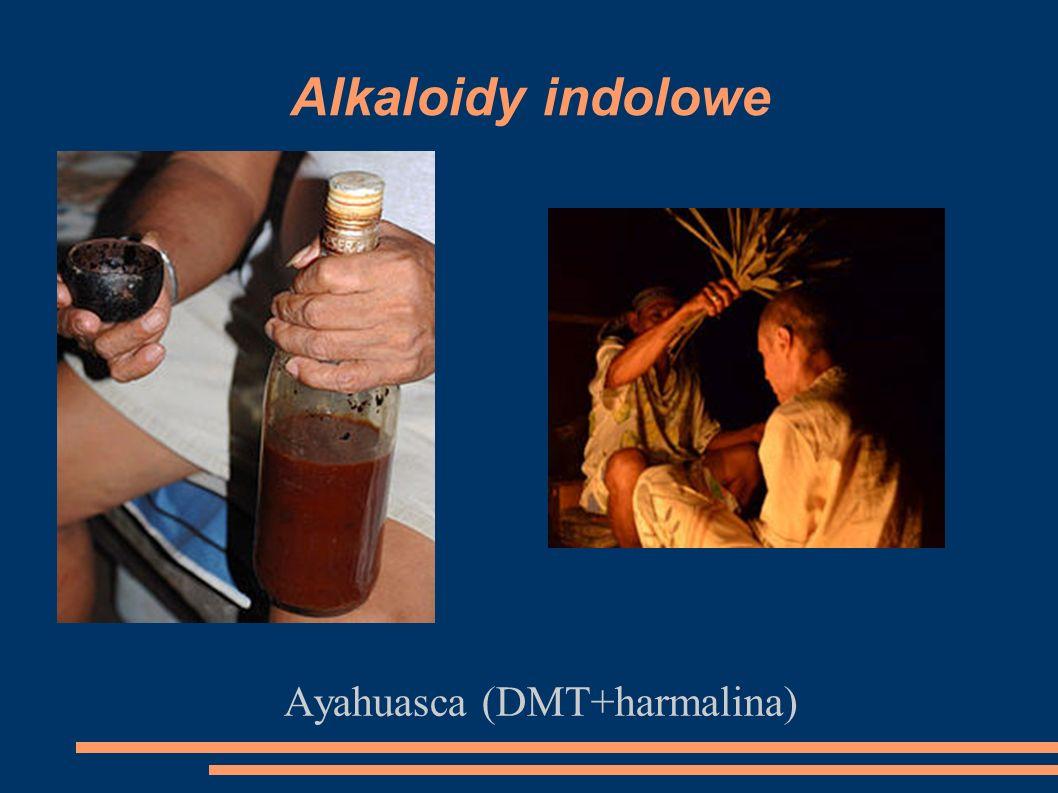 Alkaloidy indolowe Ayahuasca (DMT+harmalina)