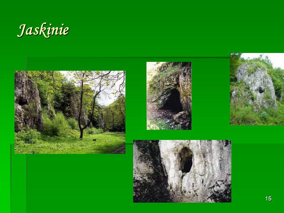 14 Utworzona została w 1959 roku. Wąwóz Mnikowski o przeciętnej głębokości ok. 50 m. i długości 1,5 km. rozcina stromą południową krawędź Garbu Tenczy