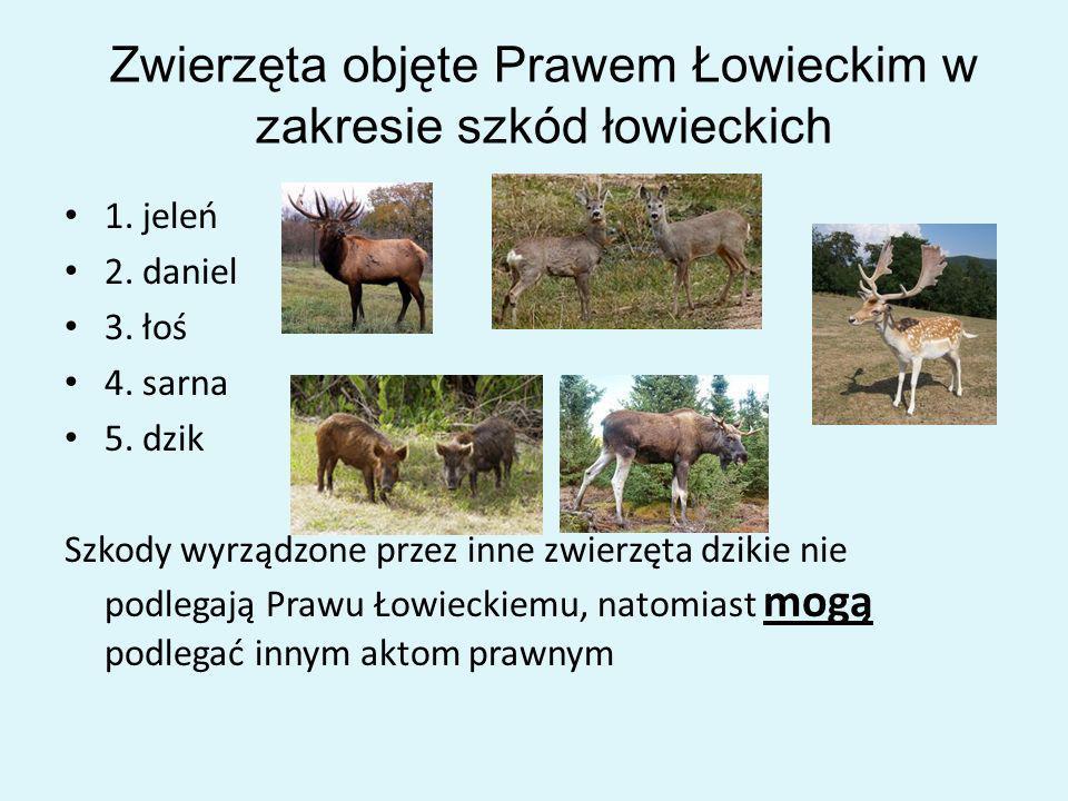 Zwierzęta objęte Prawem Łowieckim w zakresie szkód łowieckich 1. jeleń 2. daniel 3. łoś 4. sarna 5. dzik Szkody wyrządzone przez inne zwierzęta dzikie