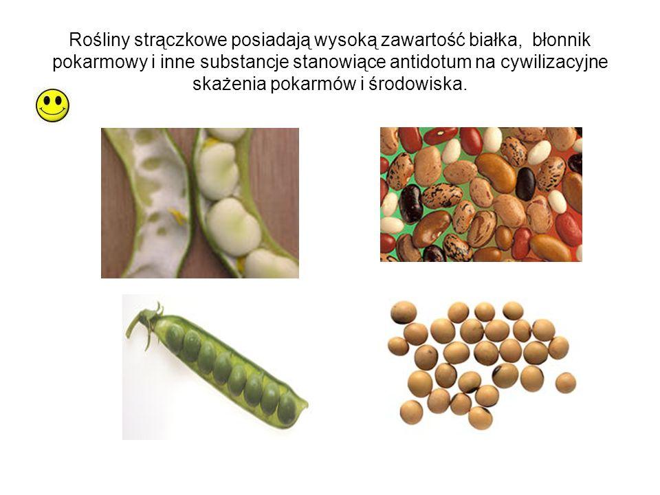 Rośliny strączkowe posiadają wysoką zawartość białka, błonnik pokarmowy i inne substancje stanowiące antidotum na cywilizacyjne skażenia pokarmów i śr