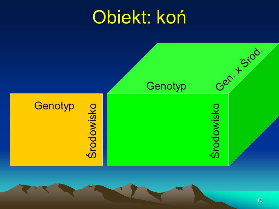 13 Obiekt: koń Genotyp Środowisko Genotyp Gen. x Środ.
