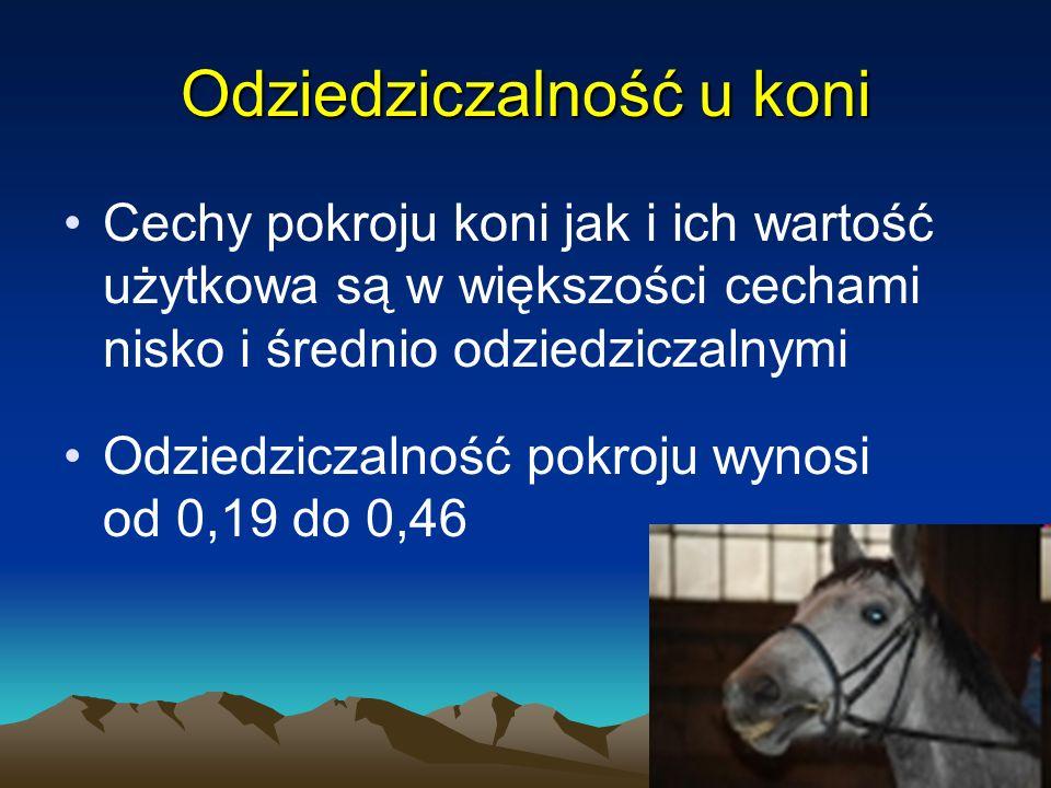 24 Odziedziczalność u koni Cechy pokroju koni jak i ich wartość użytkowa są w większości cechami nisko i średnio odziedziczalnymi Odziedziczalność pok