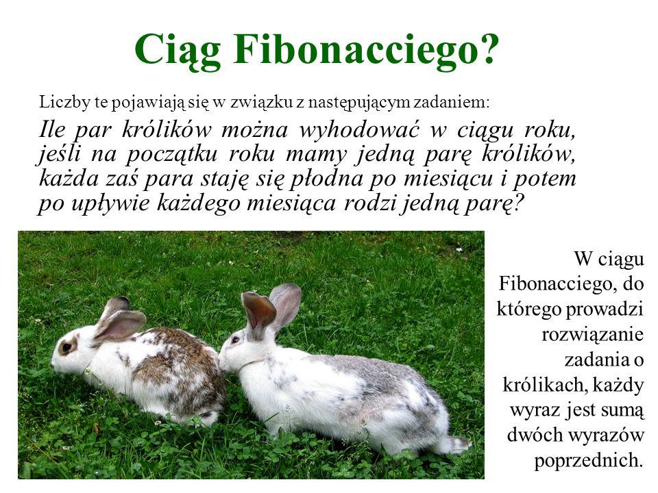 Ciąg Fibonacciego? Liczby te pojawiają się w związku z następującym zadaniem: Ile par królików można wyhodować w ciągu roku, jeśli na początku roku ma