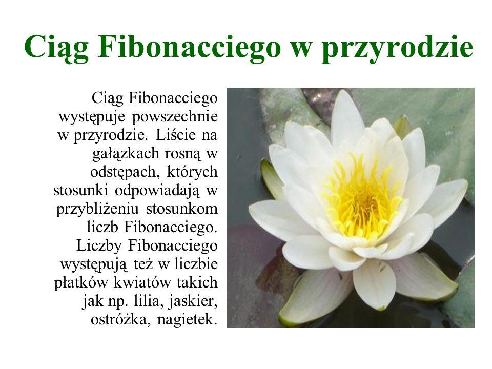 Ciąg Fibonacciego występuje powszechnie w przyrodzie. Liście na gałązkach rosną w odstępach, których stosunki odpowiadają w przybliżeniu stosunkom lic
