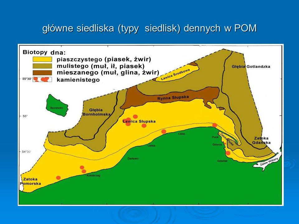zgrupowania bezkręgowców bentosowych na tle osadów