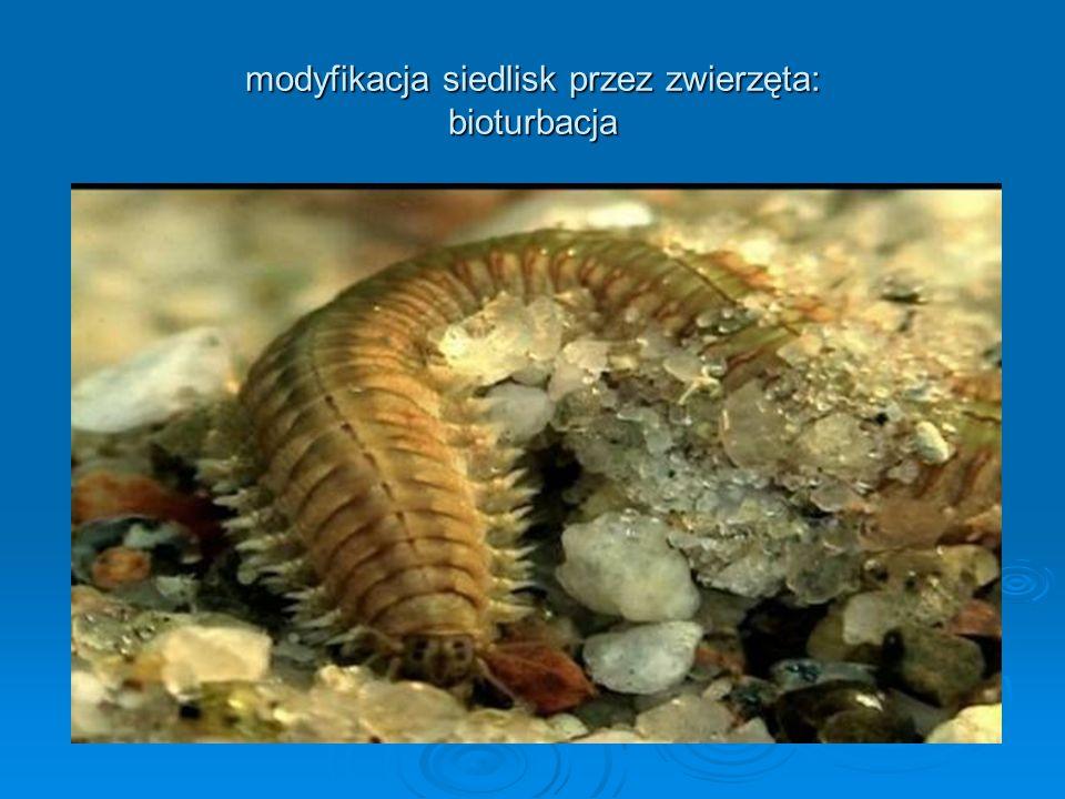 modyfikacja siedlisk przez zwierzęta: bioturbacja
