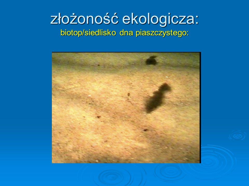 złożoność ekologicza: biotop/siedlisko dna piaszczystego: