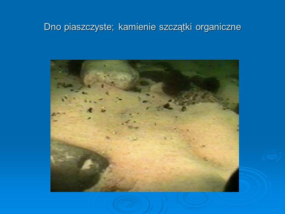 Dno piaszczyste: ripplemarki (pręgi faliste) i okresowa materia organiczna w zagłębieniach