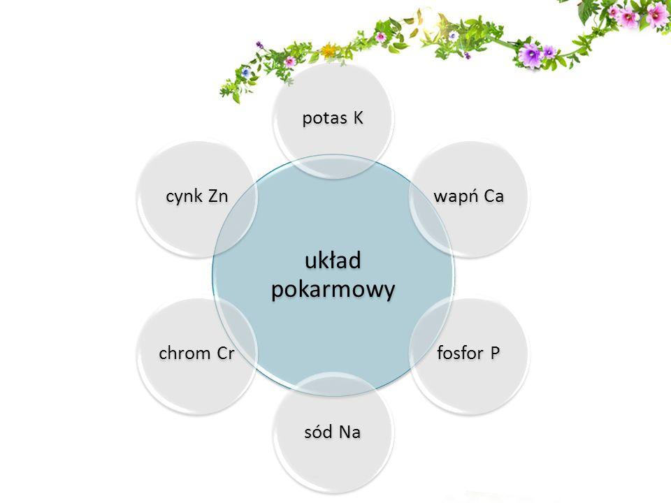 Jakie jest działanie minerałów zawartych w Onyx Plus.