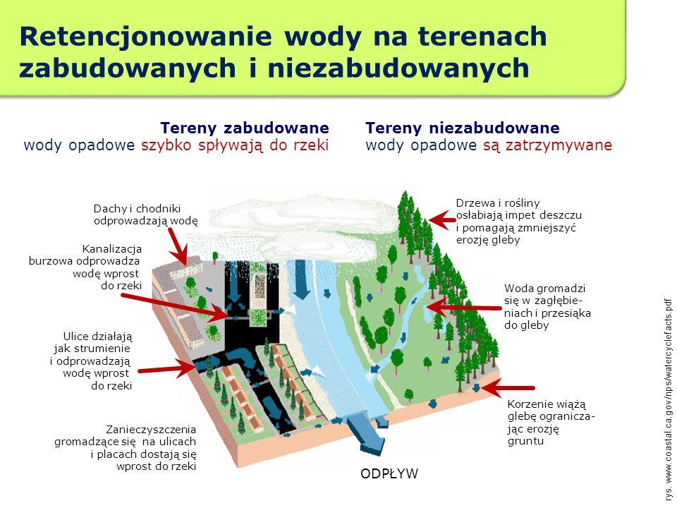 Retencjonowanie wody na terenach zabudowanych i niezabudowanych Roślinność buduje organiczną glebę ułatwiającą filtrację rys. www.coastal.ca.gov/nps/w