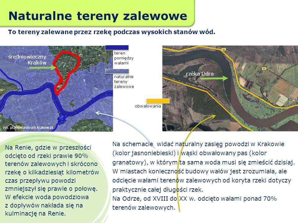 Zostawmy rzekom więcej miejsca Z inicjatywy WWF Polska rozpoczęto projekt polegający na odsunięciu wałów od rzeki w gminie Wołów nad Odrą.