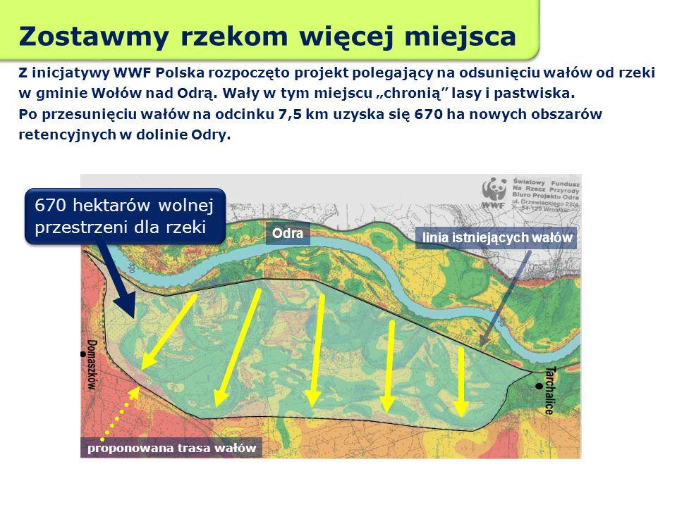 Zostawmy rzekom więcej miejsca Z inicjatywy WWF Polska rozpoczęto projekt polegający na odsunięciu wałów od rzeki w gminie Wołów nad Odrą. Wały w tym