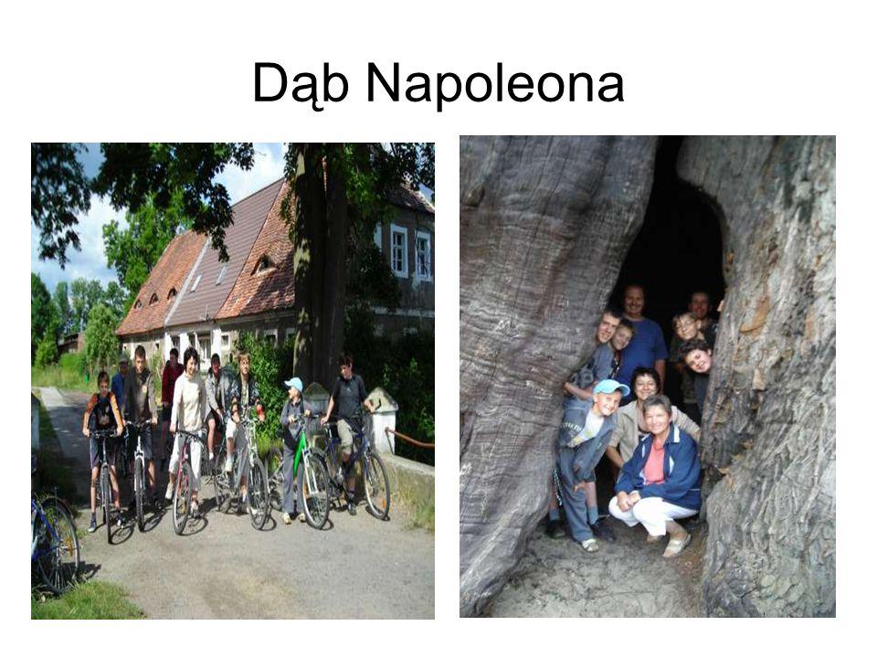 Dąb Napoleona