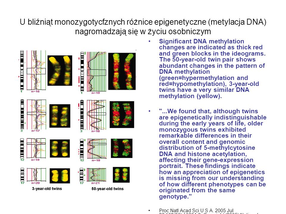 U bliźniąt monozygotycfznych różnice epigenetyczne (metylacja DNA) nagromadzają się w życiu osobniczym Significant DNA methylation changes are indicat