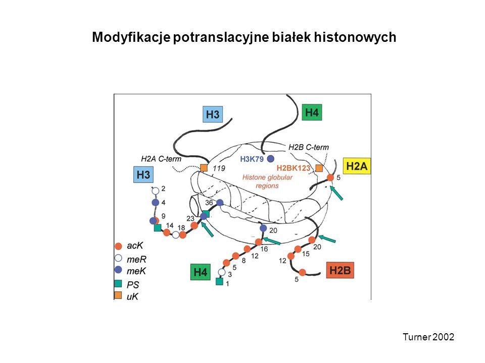 Turner 2002 Modyfikacje potranslacyjne białek histonowych