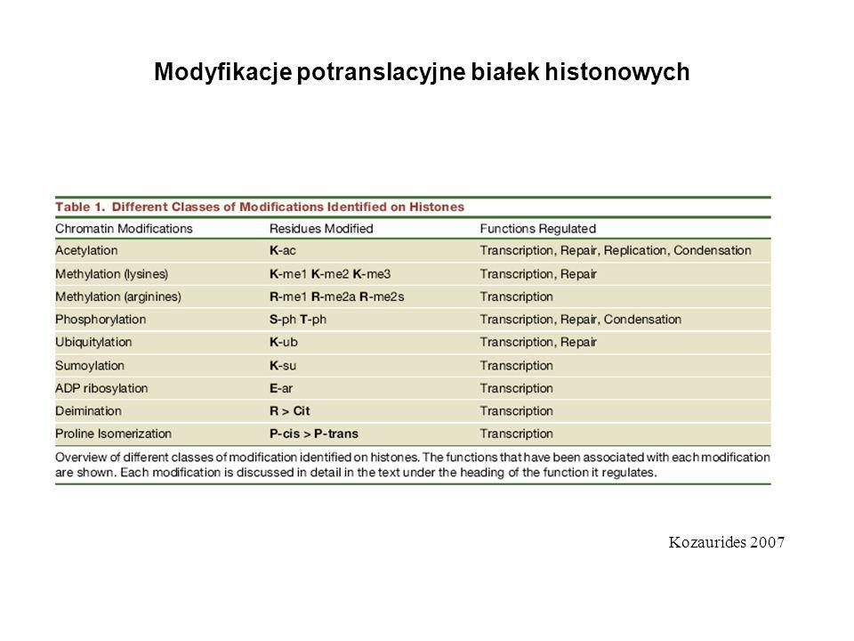 Modyfikacje potranslacyjne białek histonowych Kozaurides 2007
