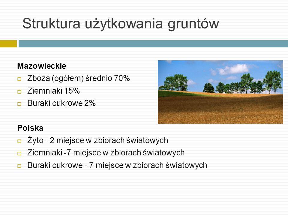 Struktura użytkowania gruntów Mazowieckie Zboża (ogółem) średnio 70% Ziemniaki 15% Buraki cukrowe 2% Polska Żyto - 2 miejsce w zbiorach światowych Zie