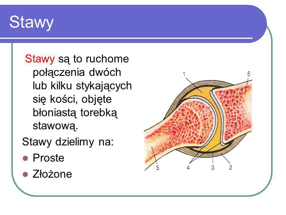 Stawy Stawy są to ruchome połączenia dwóch lub kilku stykających się kości, objęte błoniastą torebką stawową. Stawy dzielimy na: Proste Złożone