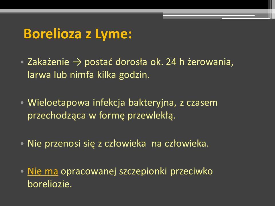 Borelioza z Lyme: Zakażenie postać dorosła ok. 24 h żerowania, larwa lub nimfa kilka godzin. Wieloetapowa infekcja bakteryjna, z czasem przechodząca w