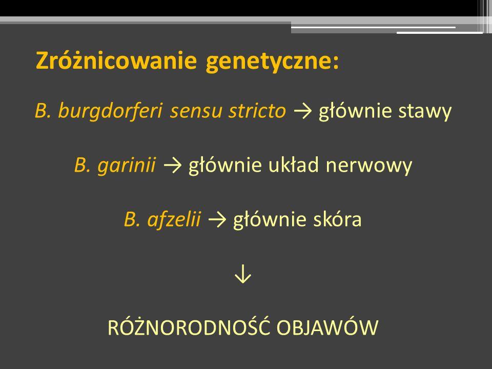 Zróżnicowanie genetyczne: B. burgdorferi sensu stricto głównie stawy B. garinii głównie układ nerwowy B. afzelii głównie skóra RÓŻNORODNOŚĆ OBJAWÓW