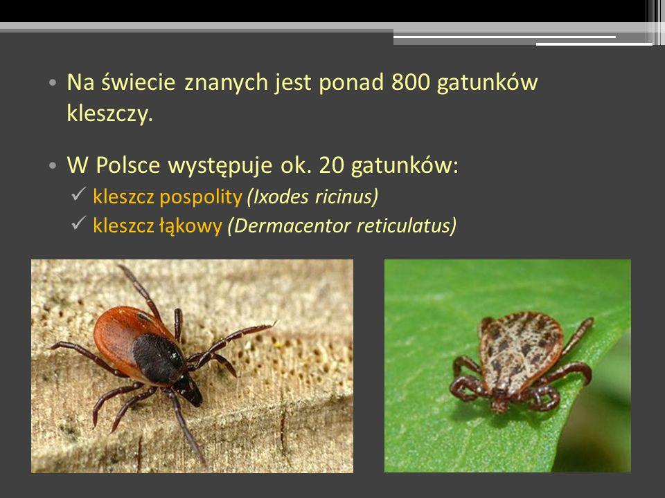 Na świecie znanych jest ponad 800 gatunków kleszczy. W Polsce występuje ok. 20 gatunków: kleszcz pospolity (Ixodes ricinus) kleszcz łąkowy (Dermacento