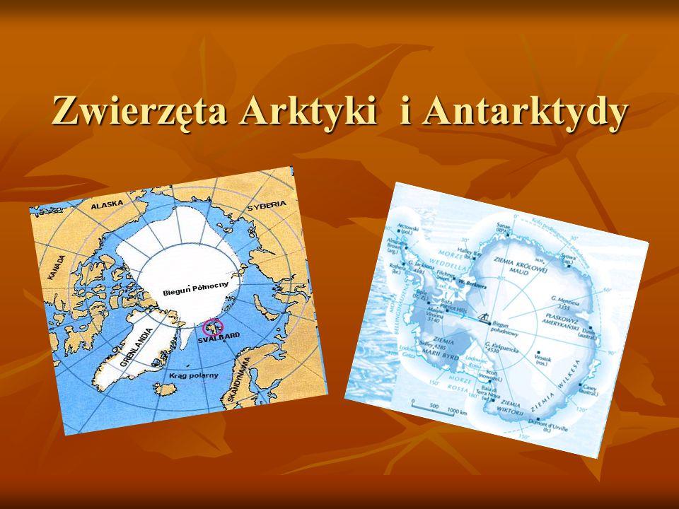 Zwierzęta Arktyki i Antarktydy