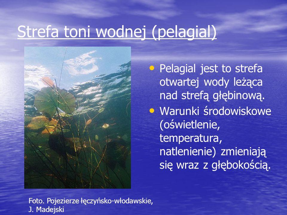 Strefa toni wodnej (pelagial) Pelagial jest to strefa otwartej wody leżąca nad strefą głębinową. Warunki środowiskowe (oświetlenie, temperatura, natle