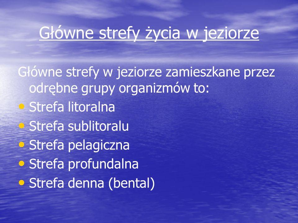 Główne strefy życia w jeziorze Główne strefy w jeziorze zamieszkane przez odrębne grupy organizmów to: Strefa litoralna Strefa sublitoralu Strefa pela