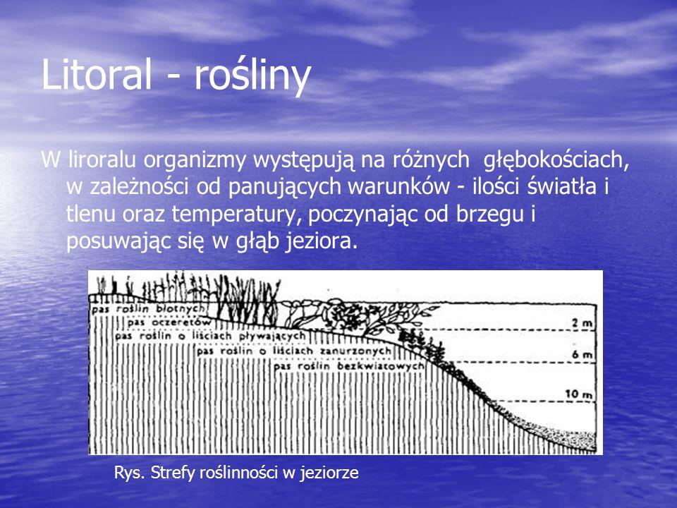 Litoral - zwierzęta Występuje we wszystkich wodach słodkich w Polsce.