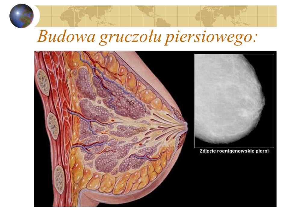 Budowa gruczołu piersiowego: