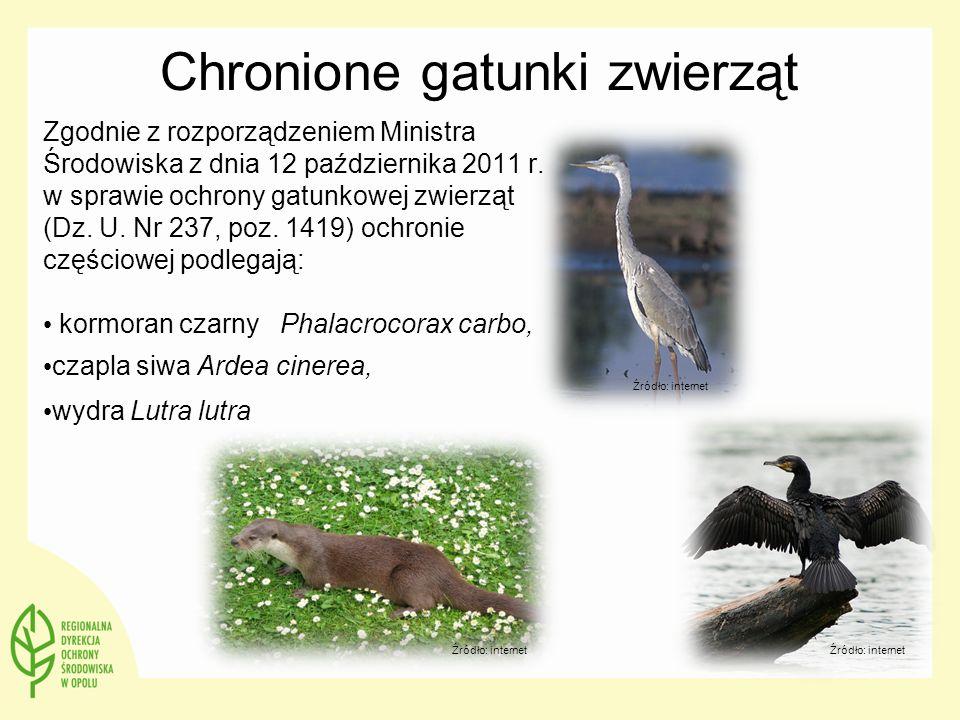 Chronione gatunki zwierząt Zgodnie z rozporządzeniem Ministra Środowiska z dnia 12 października 2011 r. w sprawie ochrony gatunkowej zwierząt (Dz. U.