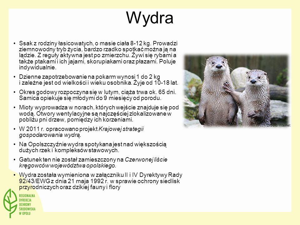 Wydra Ssak z rodziny łasicowatych, o masie ciała 8-12 kg. Prowadzi ziemnowodny tryb życia, bardzo rzadko spotkać można ją na lądzie. Z reguły aktywna
