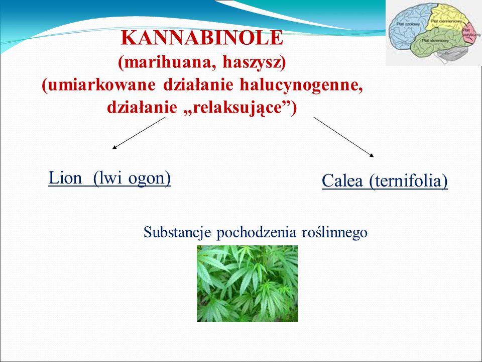 KANNABINOLE (marihuana, haszysz) (umiarkowane działanie halucynogenne, działanie relaksujące) Lion (lwi ogon) Calea (ternifolia) Substancje pochodzeni
